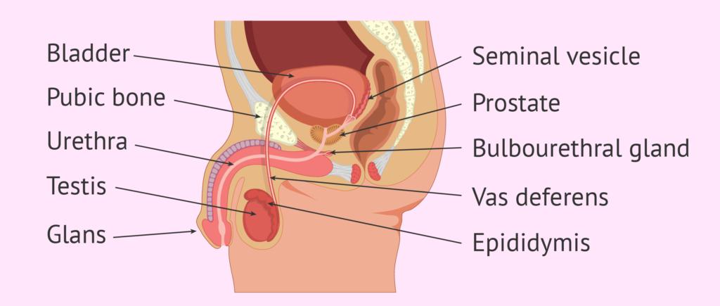 Острый простатит у мужчин: симптомы и лечение