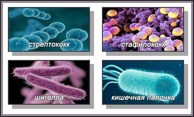 Способы применения препарата фосфомицин