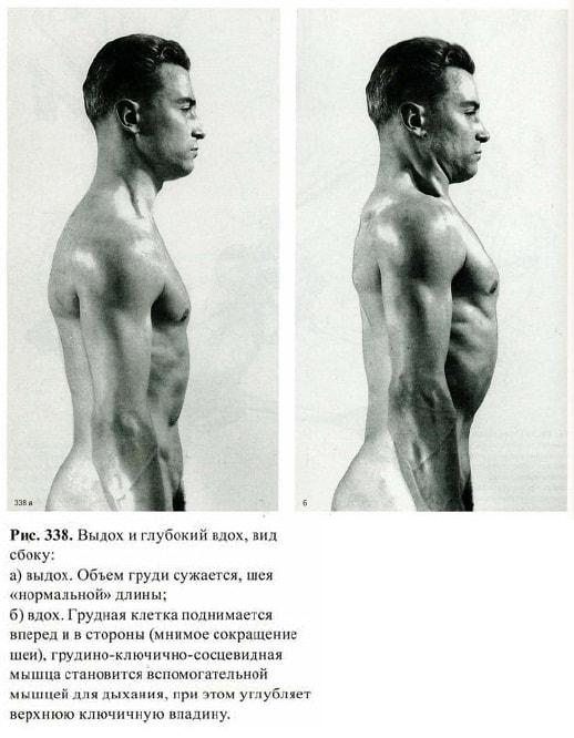Симптомы и лечение эмфизематозной грудной клетки