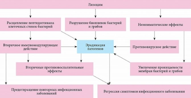 Лизобакт - инструкция по применению и отзывы