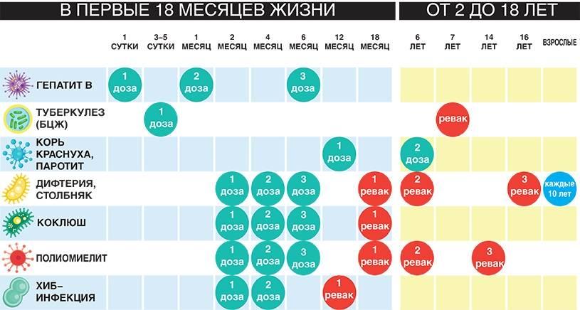 Календарь и таблица прививок для детей. самые важные прививки для ребенка