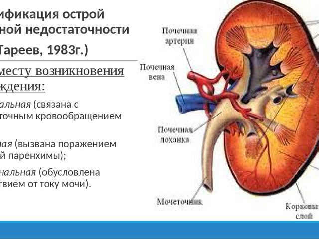Пиелонефрит и гломерулонефрит: сходство и различие