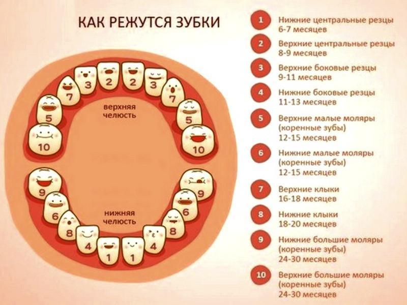 Прорезывание зубов у детей до года, температура при прорезывании