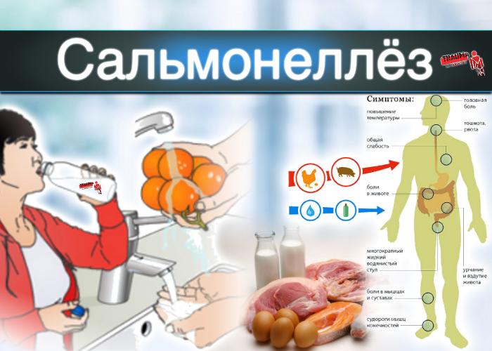 Сальмонеллез: симптомы у взрослых, инкубационный период и методы лечения кишечной инфекции